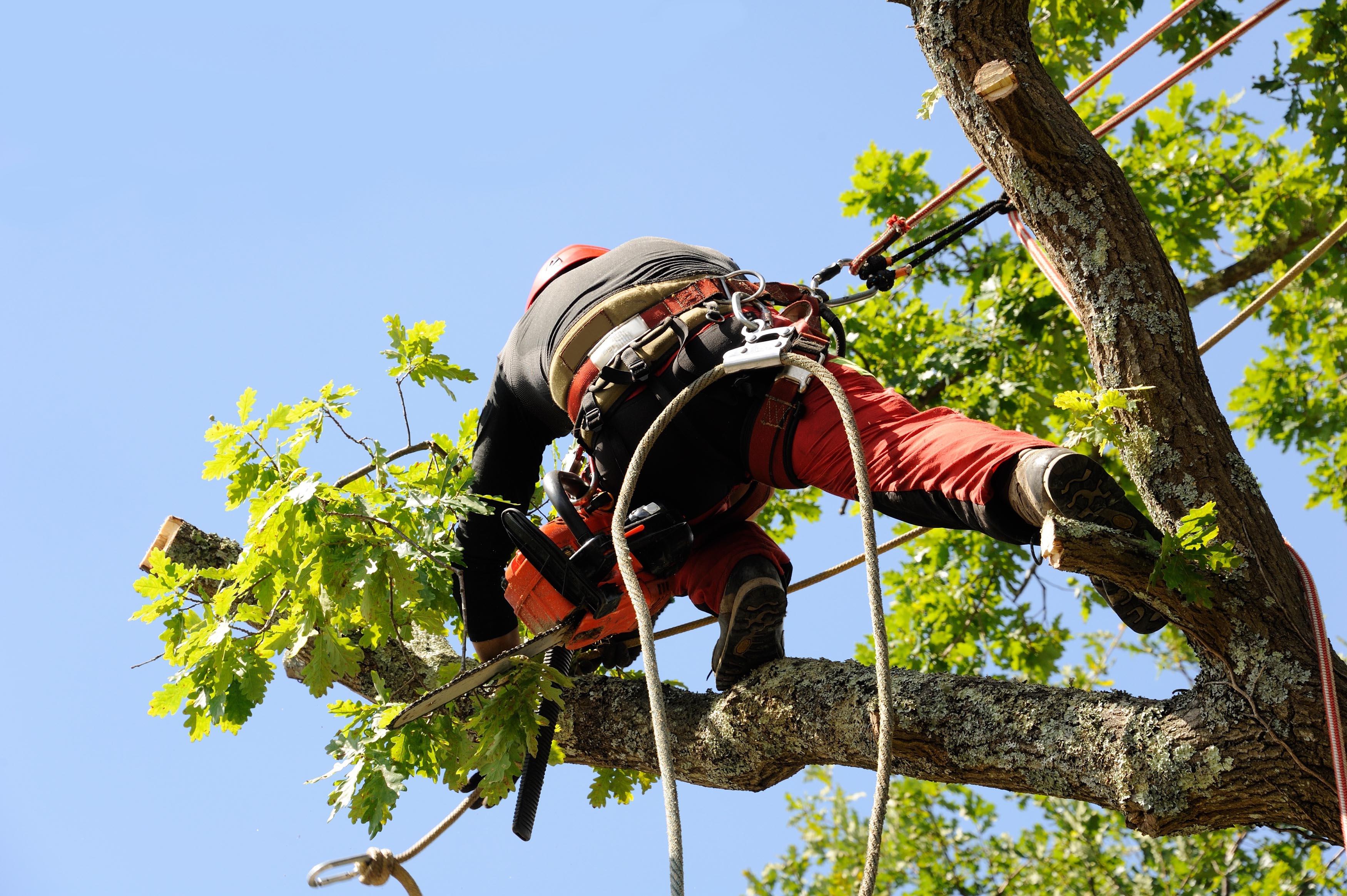abattre convenablement un arbre