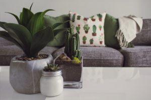plantes en décoration d'intérieur