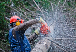abattre un arbre