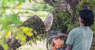 elagage-arbres