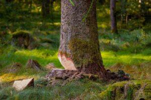 Tout ce qu'il faut savoir sur les prix d'abattage d'un arbre