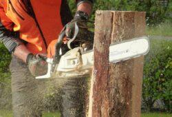 Élagage d'arbre : quelles sont les règles à suivre?