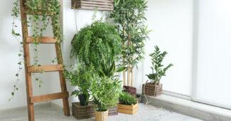 plantes mettre dans votre chambre